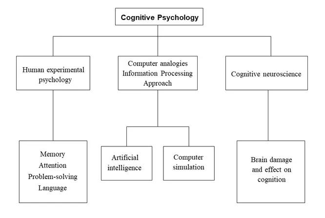 Cognitive Psychology là gì?