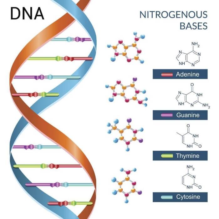 Học thuyết sinh học cho rằng cấu trúc gen, DNA có ảnh hưởng đến hành vi con người