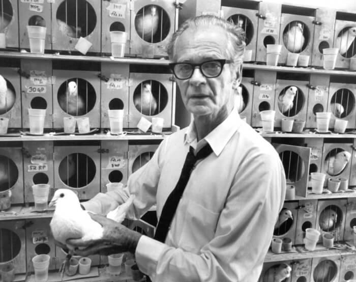 Skinner và những thí nghiệm trên bồ câu