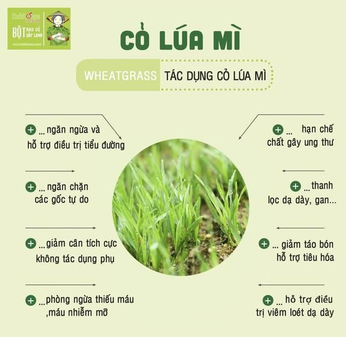 Công dụng của cỏ lúa mì